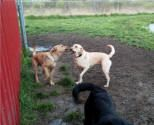Play time at Storm's Ahead Kennels.