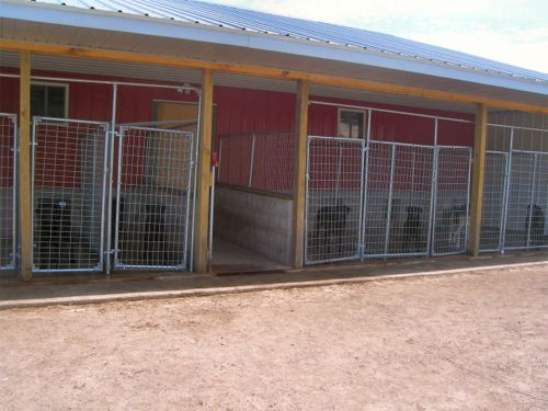 Storm 39 s ahead kennels boarding facilities for Boarding facility for dogs